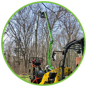 tree removal service Chester CT